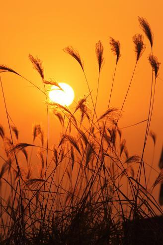 【余晖下的芦苇】在很多电影片段中都能看到,在夕阳的余晖下,金色的芦苇在风中摇摆。余晖下的这几株芦苇跟电影里有几分相似,举起相机留下了这美丽的瞬间。.JPG