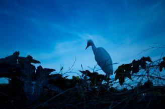 《觅食》这是一只受伤的幼鸟,它站在南瓜架上四处张望,似乎在寻觅自己的晚餐。因为受伤的缘故,它在南瓜架上停留了很长的时间,我才有幸近距离拍摄到这美丽的画面。.jpg