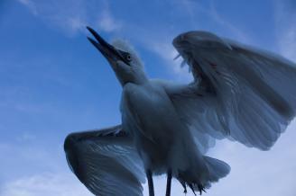 《展翅》每当看到那些精彩的动物摄影作品时,我都会有一种想自己尝试拍摄的冲动。鸟儿是很难近距离拍摄的,因为这只鸟受了伤,所以我才有幸拍到这幅作品。.jpg