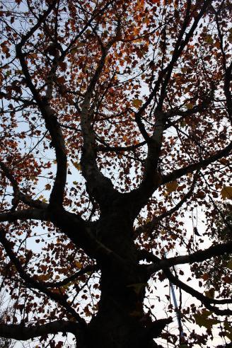 《树魂》这是我第一张剪影作品,也是我在摄影方面进步的标志。枝干和树叶组成构成了一棵树的灵魂,而我用手中的相机,向人们展示了它高大的灵魂。.jpg