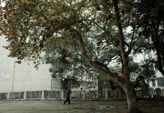 方雅宣《梧桐树下》.JPG